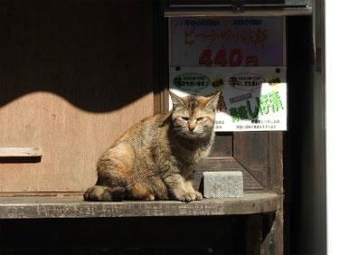 三溪園の猫 170430撮影 90