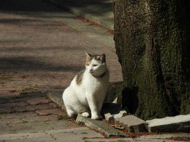 三溪園の猫 170430撮影 91