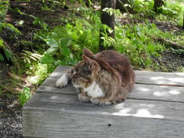 猫 三溪園 大池 160617撮影 5