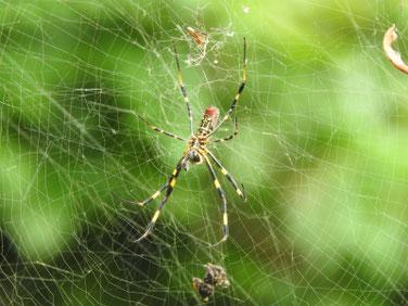 女郎蜘蛛(じょろうぐも)散策路 200927撮影 543