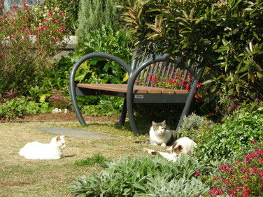 横浜山手ブラフ99ガーデンの猫 170408撮影 77