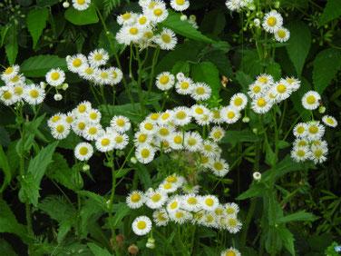 春紫苑(はるじおん) 散策路 200513撮影 1139
