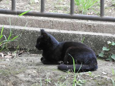 猫 散策路 170606撮影 95