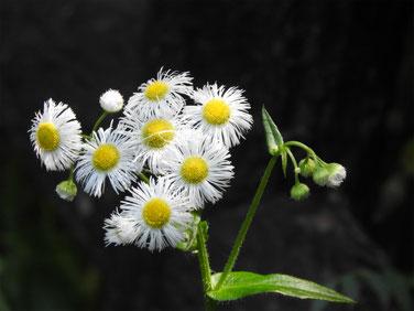 春紫苑(はるじおん) 散策路 160507撮影 72
