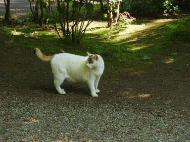 三溪園の猫 170430撮影 92