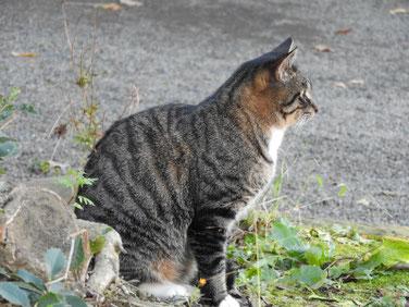 猫 三溪園 161202撮影 39