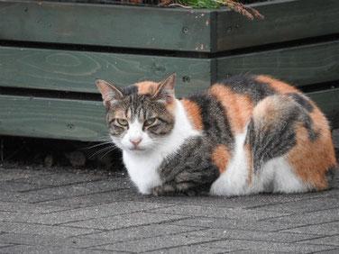 猫(ねこ) 散策路公園 180729撮影 211