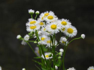 春紫苑(はるじおん) 散策路 180421撮影 474
