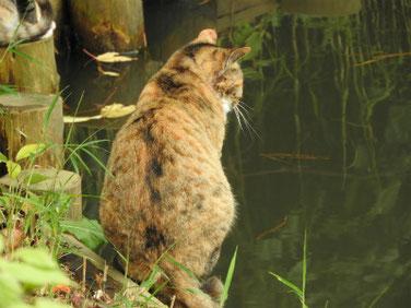 猫猫(ねこ) 三溪園 171202撮影 126