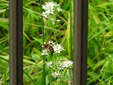 韮の花(にら) 散策路 210908撮影 507