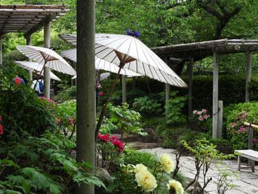牡丹 鎌倉神苑ぼたん庭園 160429撮影 54