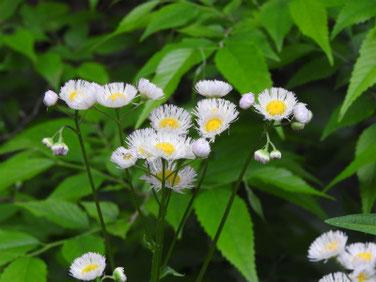 春紫苑(はるじおん) 散策路 190511撮影 875