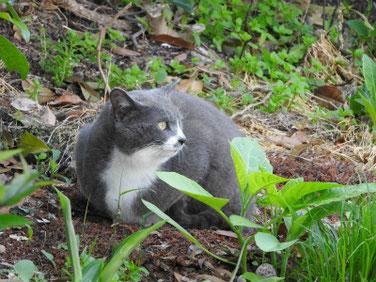 三溪園の猫 170430撮影 89