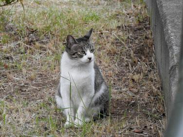 猫(ねこ) 散策路公園 180902撮影 217