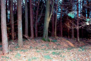 Auffällige Bodenformation im Wald