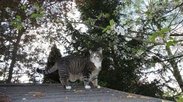 Zoé, sur le toit de la cabane