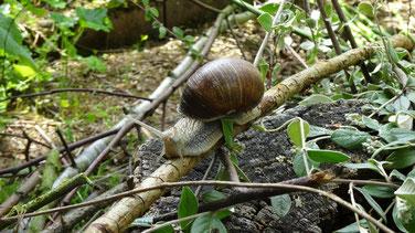 Un intrus dans le jardin