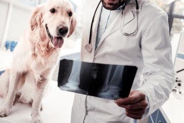Tierarzt Bernd Nickoleit, triggerpunkt, Röntgen, MRT, Orthopädie, CT