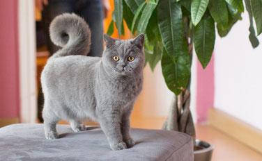 Die Fotovorlage für das Katzengemälde (Foto: E.S.)