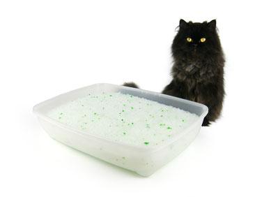 Katze sitzt hinter Katzenklo mit Silikat Katzenstreu