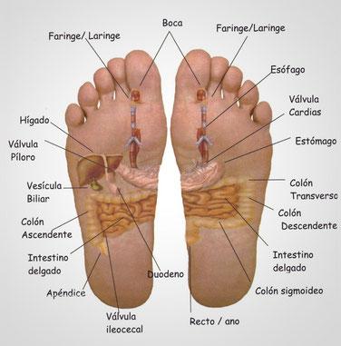 Image result for reflexologia de pie intestinos