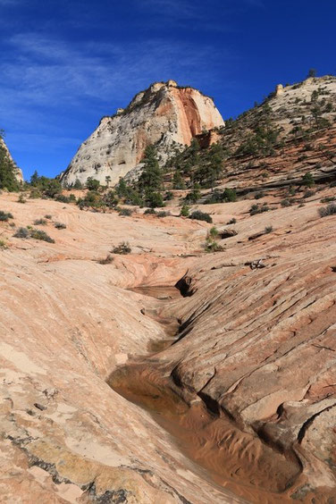 Zion NP - Many Pools Trail