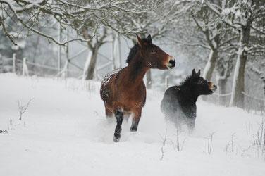Sissi und Polli beim Wettrennen im Schnee