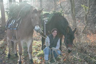 Rinaldo (1984-2013) & Daisy beim Tannenbaumtragen