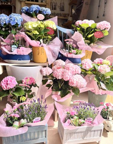 練馬 桜台 ガーデニングショップ かのはの 花瓶だって飾り方は色々。楽しめます!!ギフトにも最適。ご用途に合う厳選した花瓶を低価格でご用意。練馬 桜台 ガーデニングショップ かのはの 植物を楽しむ店です。可愛いものいっぱいです。