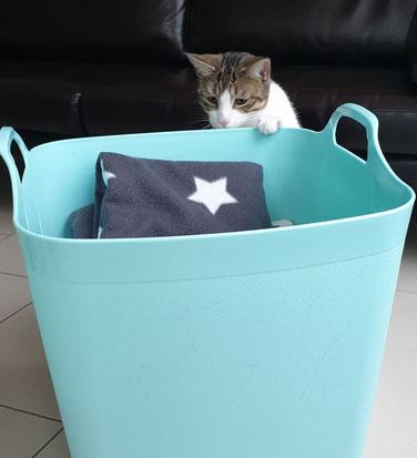 Katze Kasi und ein Korb voller Katzendecken