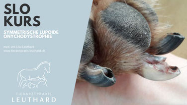 Chiropraktik beim Hund durch den Tierarzt