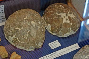 musée Victor Zaneboni  oeufs de dinosaure