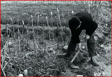 """potager dans la vallée """"Vie à Sainte Croix du Verdon février 1957"""" capture d'écran"""
