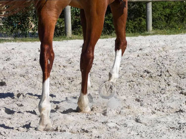 Esprit sportif et respect des chevaux, Ecurie les Rouillons, Sens