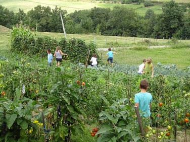 Jardin potager ferme pédagogique