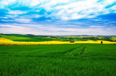 Landwirtschaft in 56626 Kruft