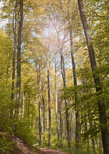 Krufter Wald (immoconsilium)