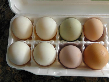 The 4 eggs on the left are duck eggs; the 4 on the right are chicken eggs.