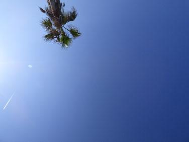 AYカメラマン、ヤシの木下から撮ってみました。