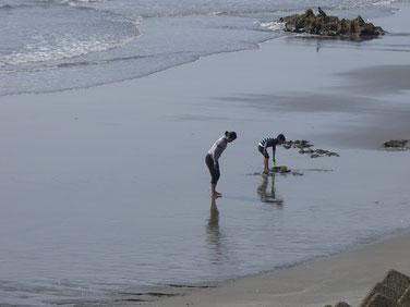 浜遊びが出来るシーズンになってきましたよ~~