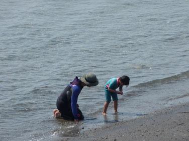 びゅーんに飽きたら海遊び。貝殻あったかな??