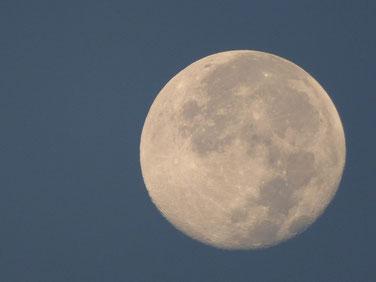 今朝5:30のお月様 空が明るくなってもくっきりしていました。