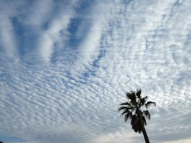 ウロコ雲~