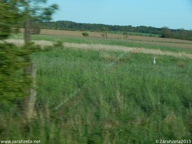 Fotografie, Fotos - Rätselbild, Storch, Tier, Vogel, Schnappschuss, Geschwindigkeit ©Zarahzeta2015