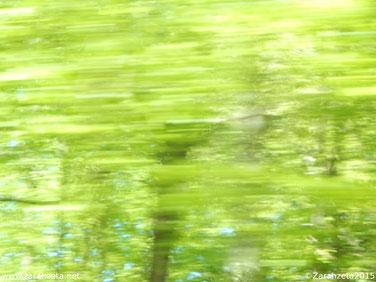 Fotografie, Fotos - Rätselbild, Wald, Schnappschuss, Geschwindigkeit ©Zarahzeta2015