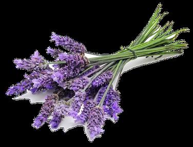 myRefan Parfümerie und Kosmetik - Lavendel Duft