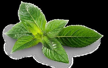 myRefan Parfümerie und Kosmetik - Minze, Pfefferminz düften