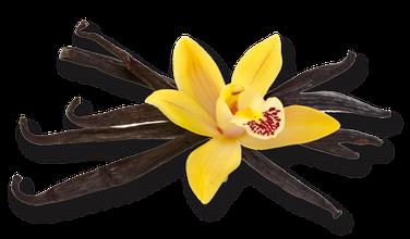 myRefan Parfümerie und Kosmetik -Vanille Duft
