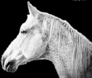 Paardenrusthuis