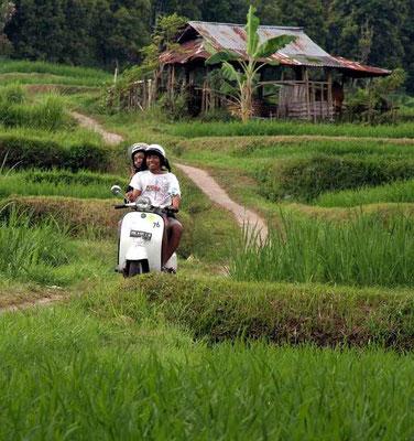 Eine Vespa auf schmalem Pfad zwischen Reisfeldern
